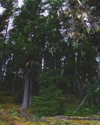 canadian-forrest-pano
