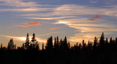 canadian-forrest-sunset-pano