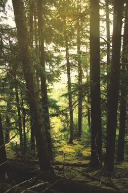 Don't forget to make a walk in the woods - it's breathtaking!