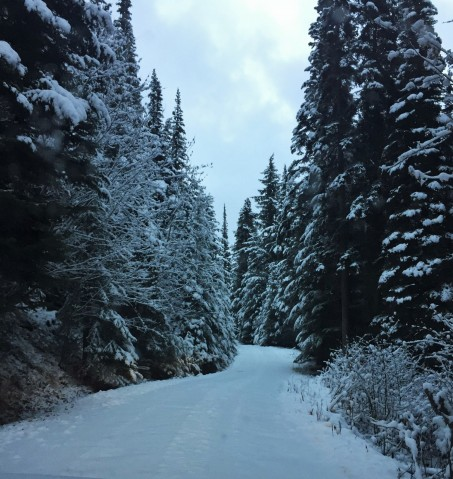 Our Driveway in Wintertime